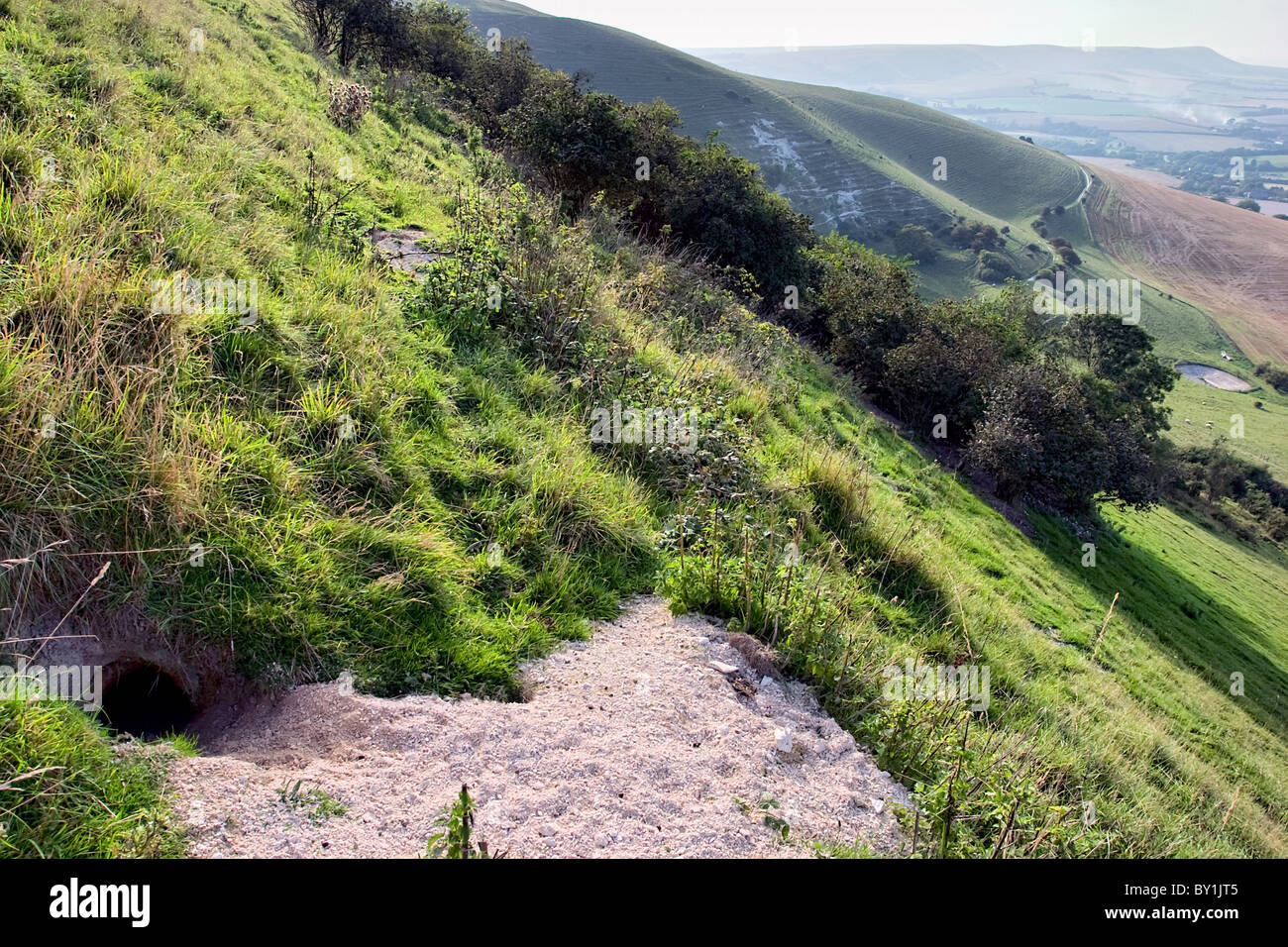 Rabbit warren on the South Downs near Wilmington Long Man looking towards Firle Beacon - Stock Image