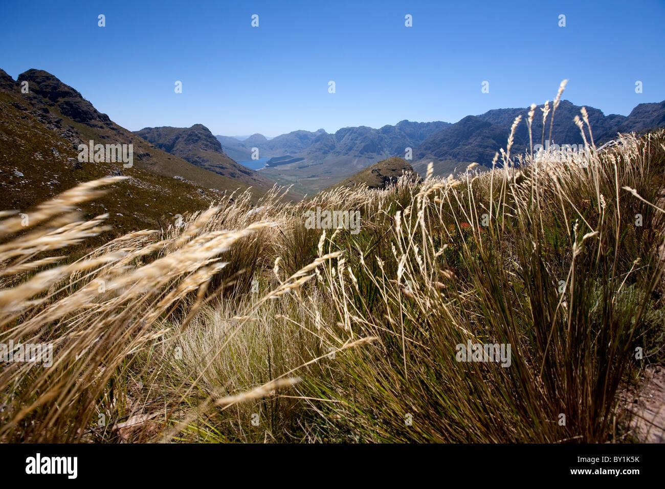 South Africa Fynbos Stock Photos & South Africa Fynbos Stock Images ...