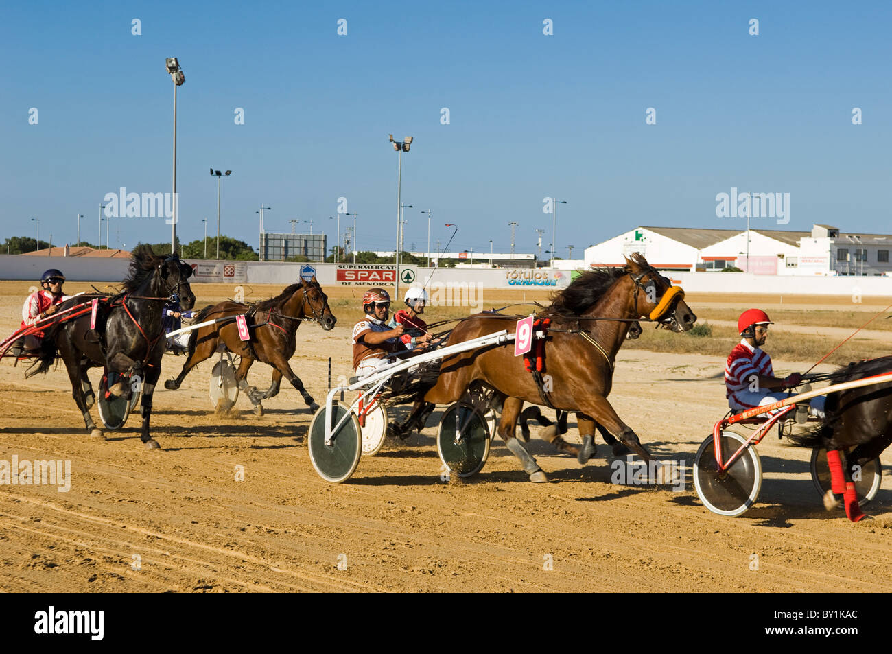 Spain, Menorca, Mahon.  Trotting races at the San Luis Road Hippodrome are a popular entertainment for locals and - Stock Image