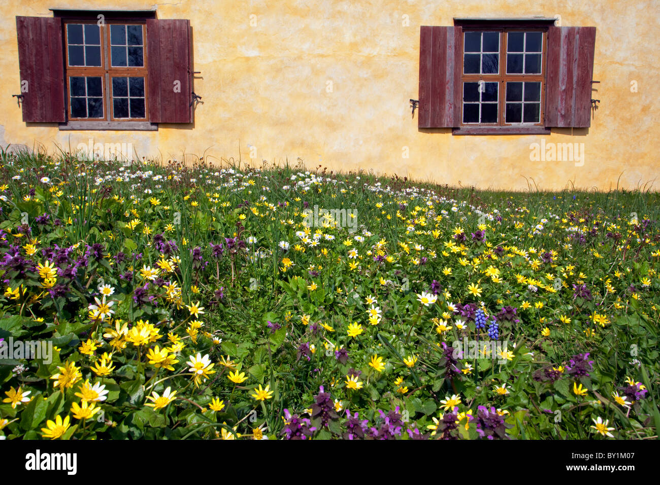 Sweden, Island of Gotland.   Spring flowers outside traditional wooden shuttered windows - Stock Image