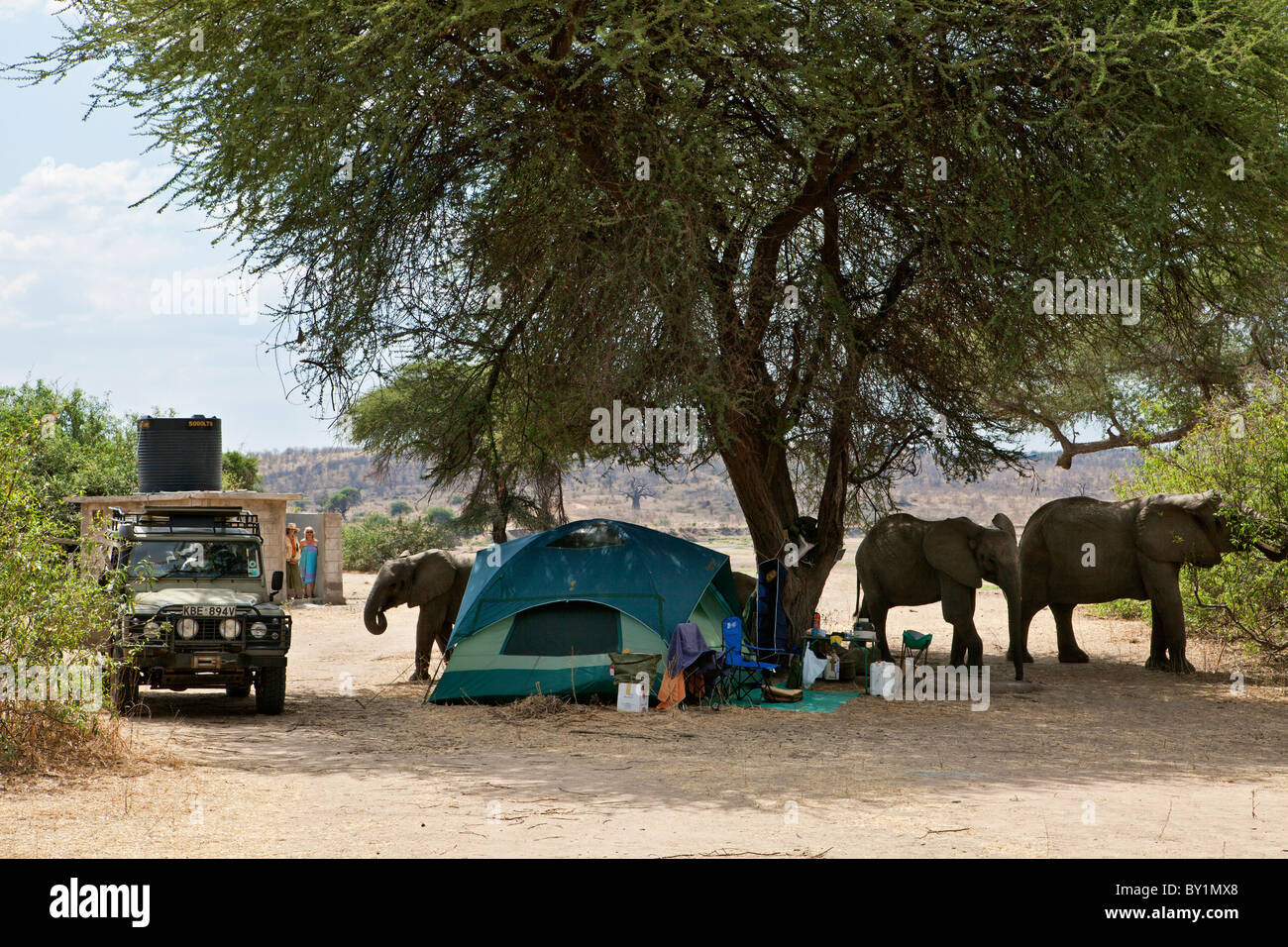Elephants visit a campsite in Ruaha National Park, approaching too close for comfort! - Stock Image
