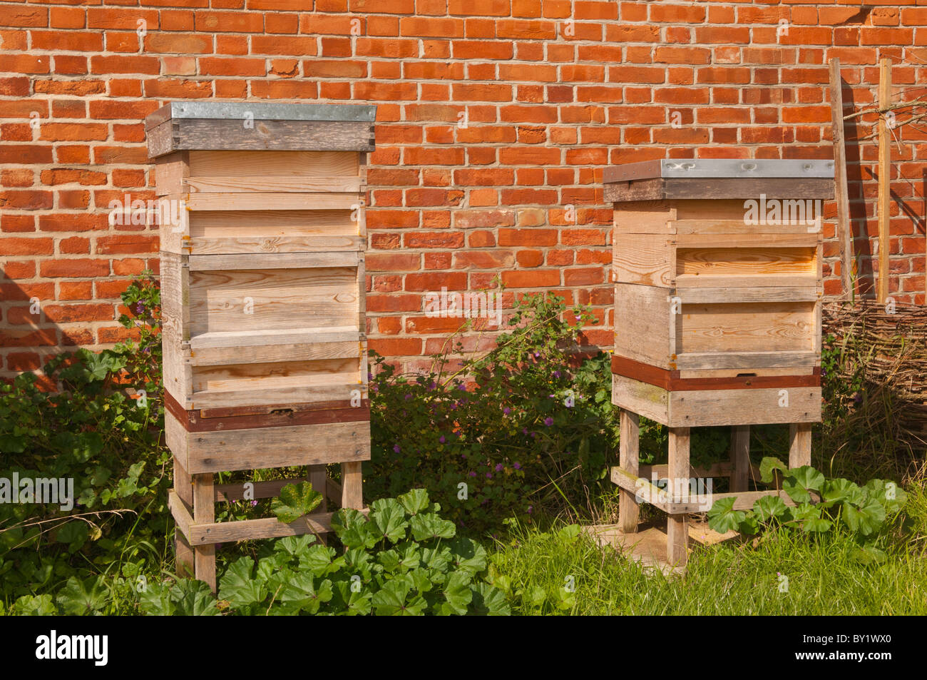 A pair of beehives in the Uk - Stock Image