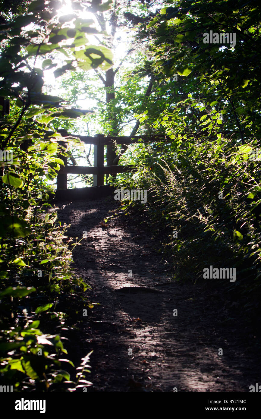 A winding path through the Mississippi Palisades State Park near Savanna, IL. - Stock Image