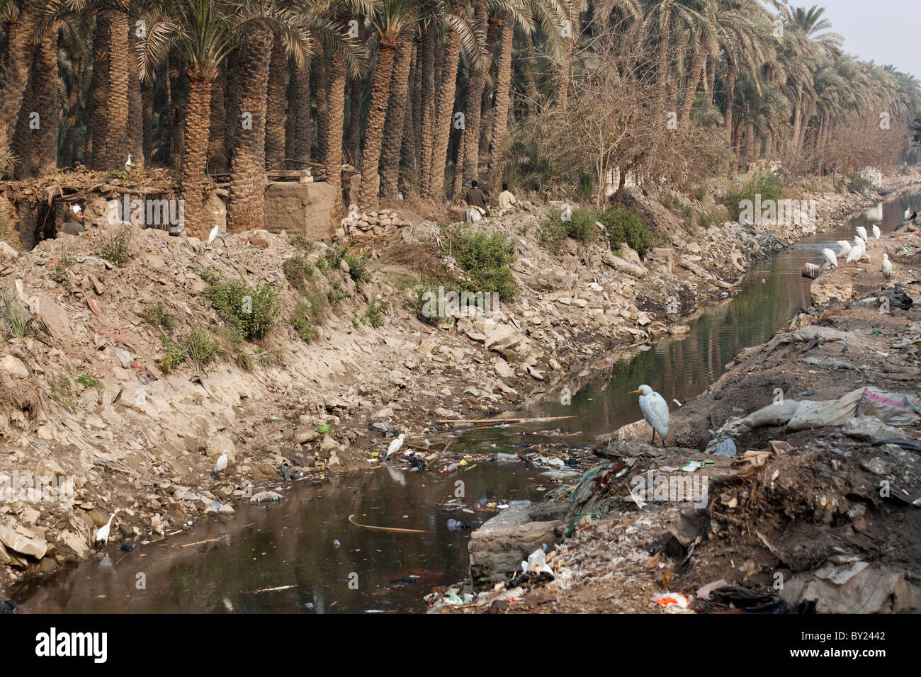 polluted canal in village near Bani Soueif, Egypt - Stock Image