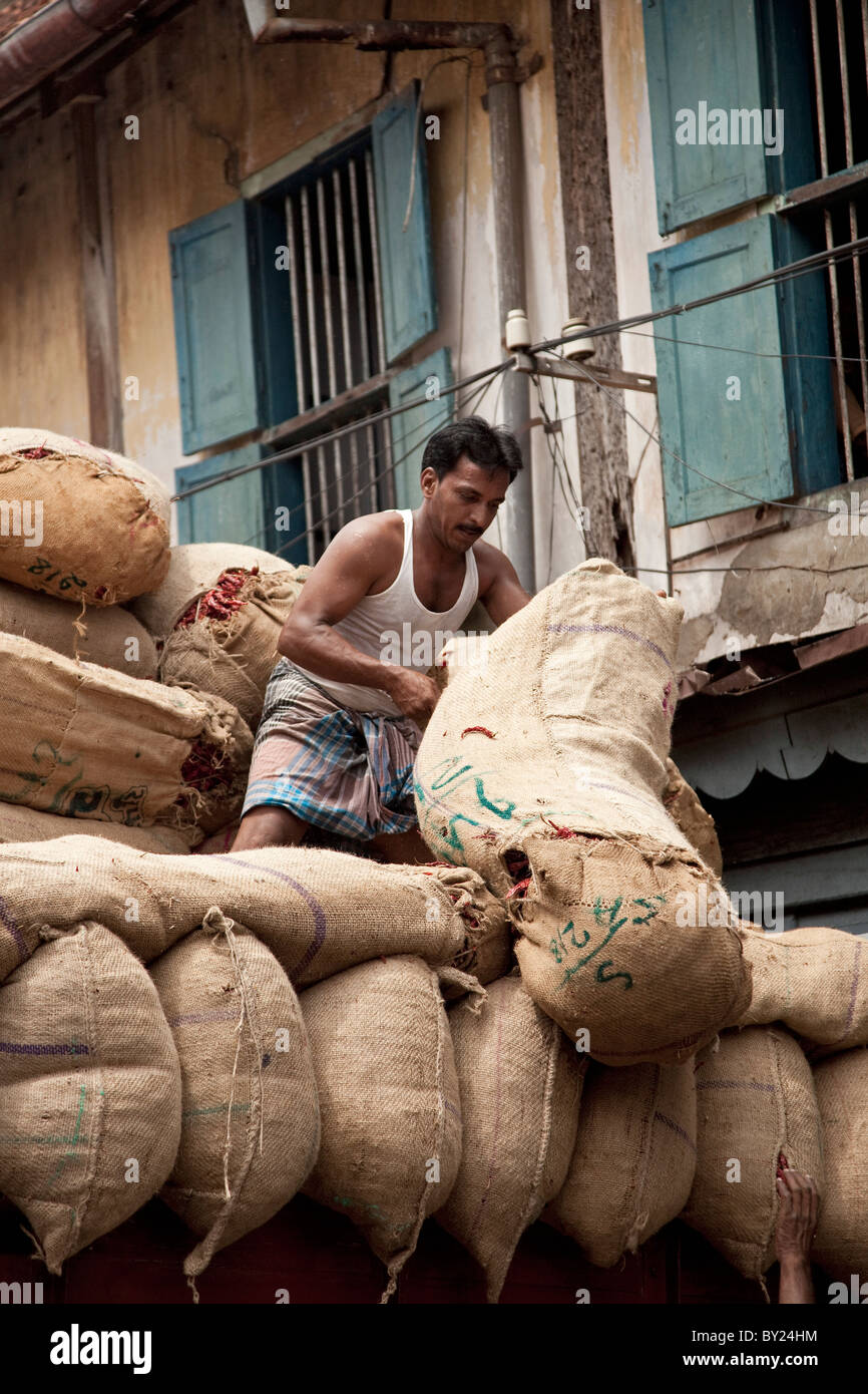 India, Cochin. A man hauls up big sacks of chilli onto the back of a lorry. - Stock Image