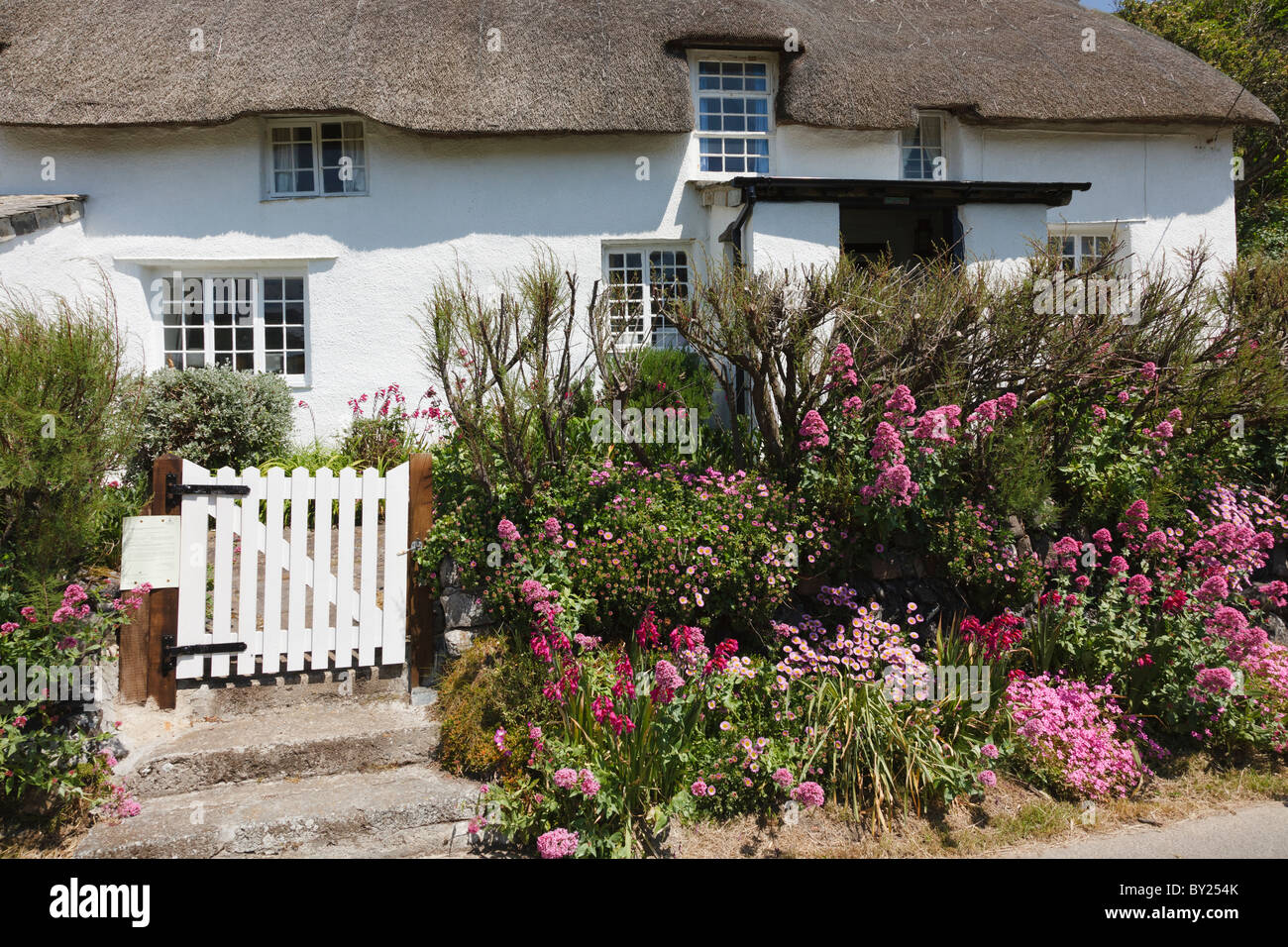 Summer flowers and thatched cottage at Crackington Haven, Cornwall, England. - Stock Image