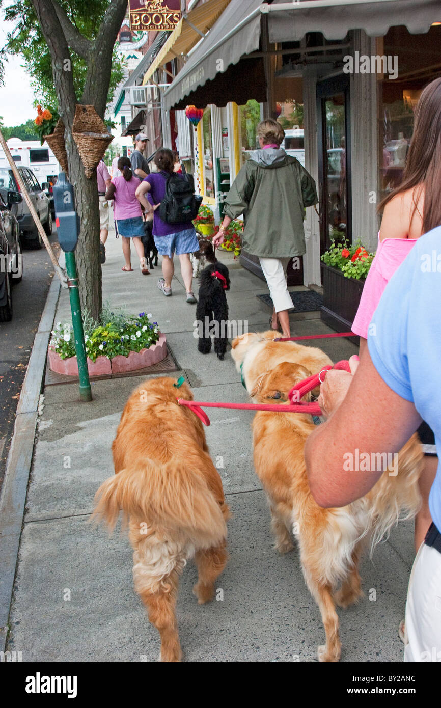 Dogs walking on leashes on sidewalk with people pet owners - Stock Image