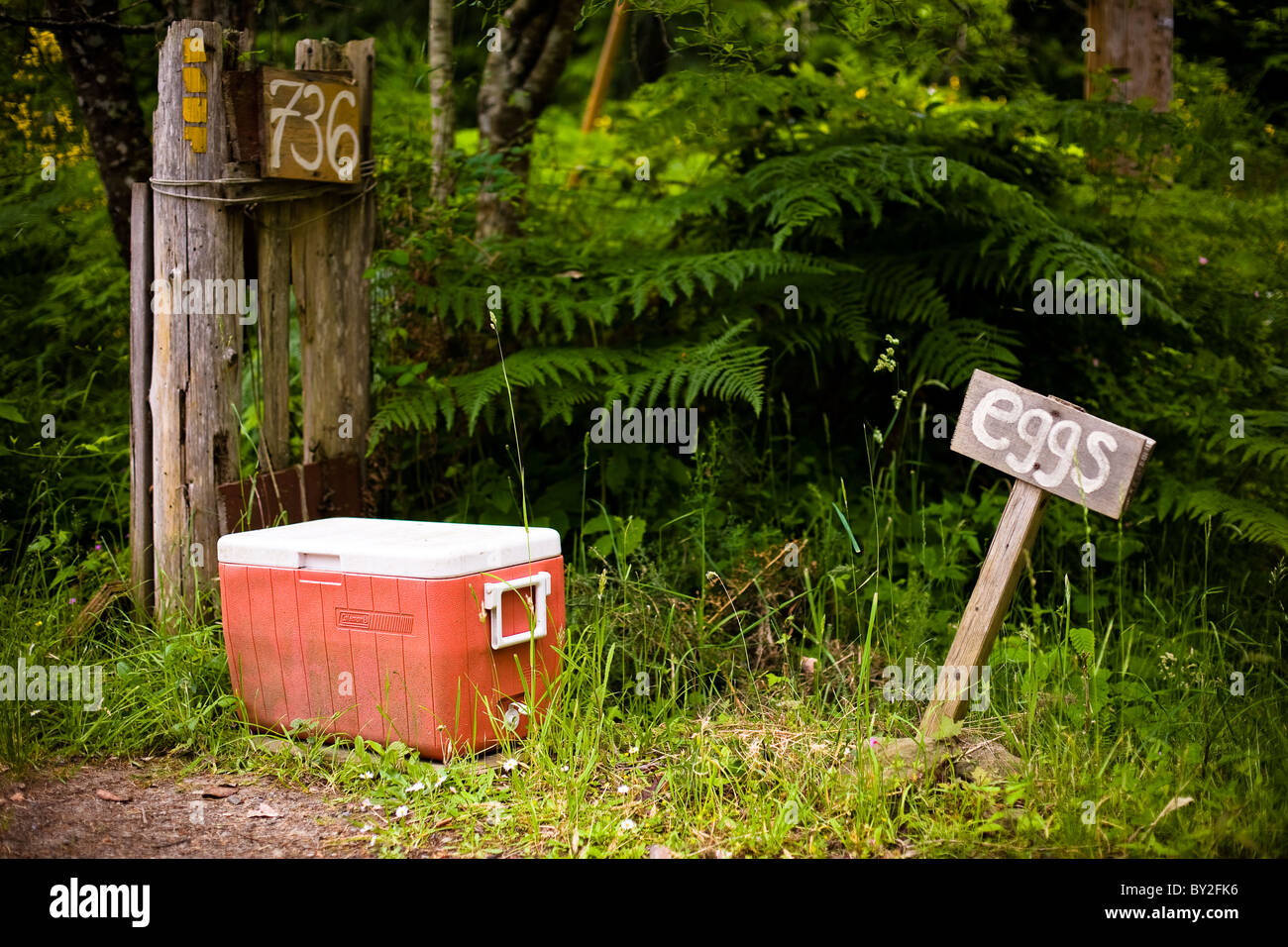 Eggs for sale in an orange cooler by the side of the road. - Stock Image