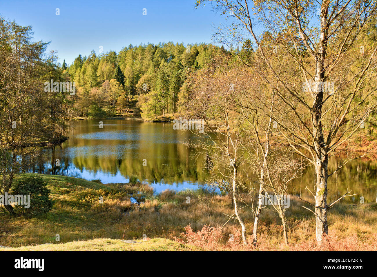 UK Cumbria Tarn Hows - Stock Image