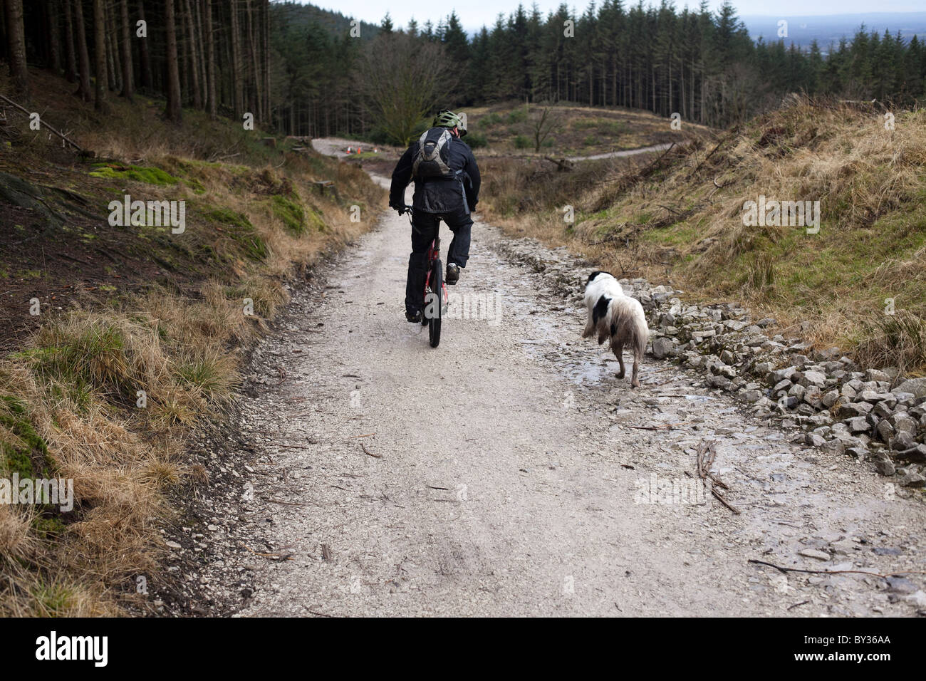 a mountain biker rides with his dog through Macclesfield Forest - Stock Image