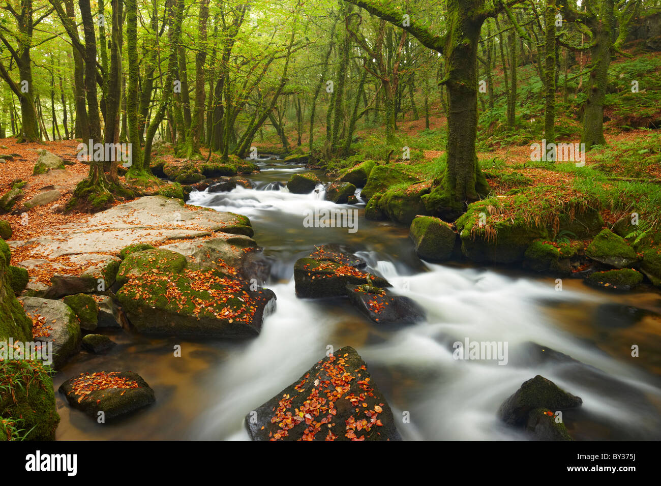 Golitha falls, a section of small waterfalls flowing through ancient woodland on Bodmin Moor - Stock Image