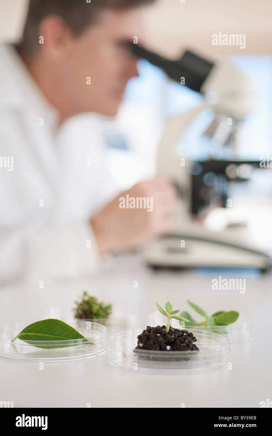 USA, New Jersey, Jersey City, Botanic laboratory - Stock Image