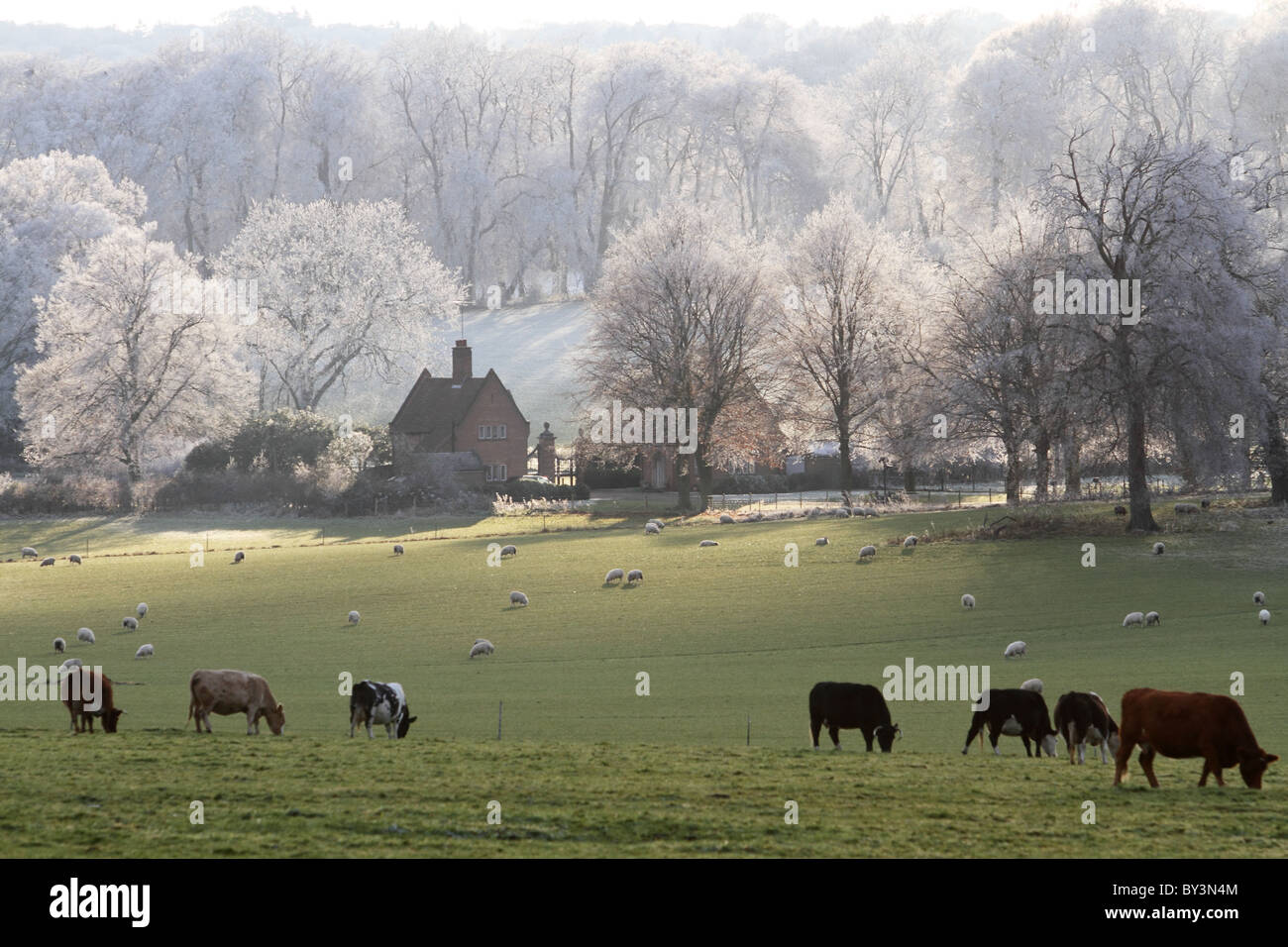 Frosty day Chequers Buckinghamshire Chilterns  winter - Stock Image