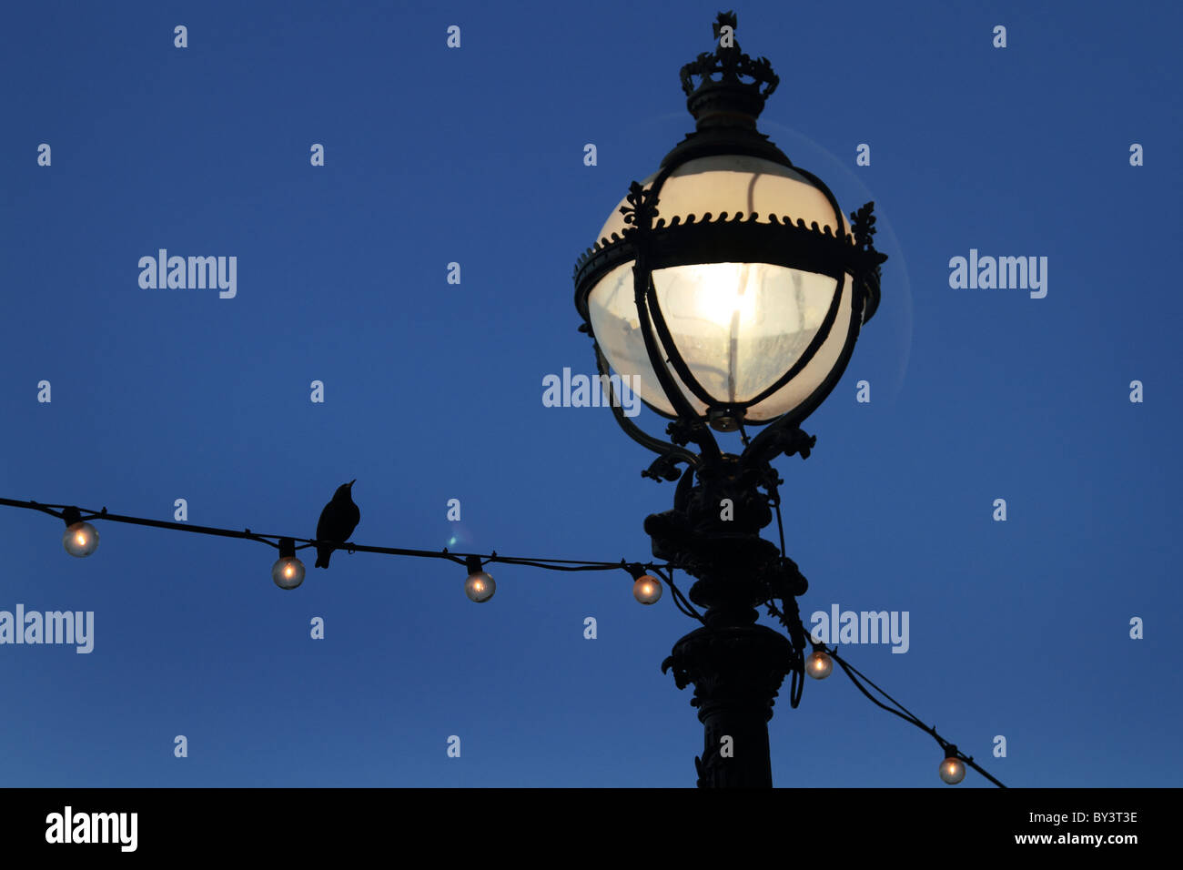Street light lamp ornamental night bird evening - Stock Image
