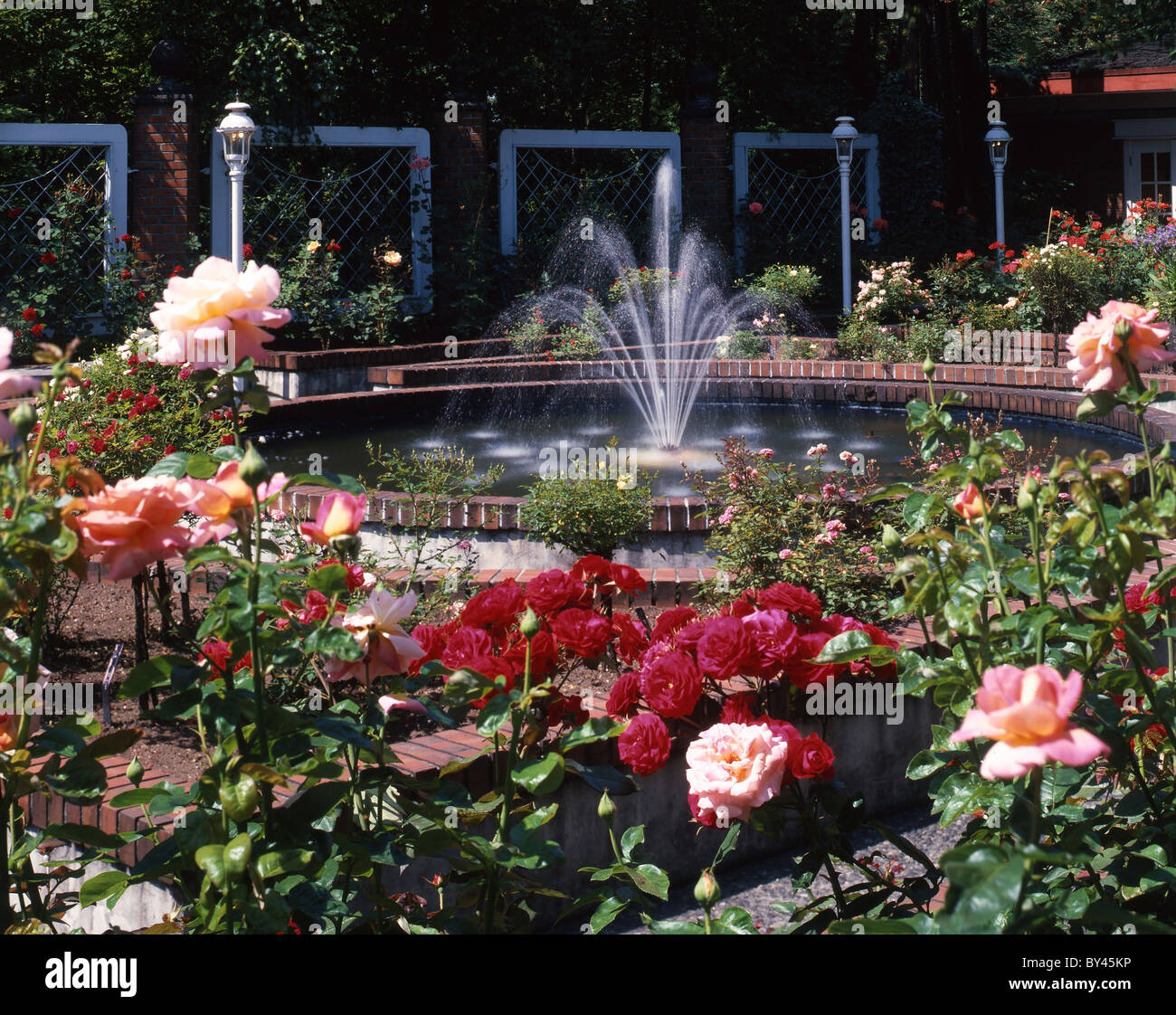 Rose Garden with Fountain - Stock Image