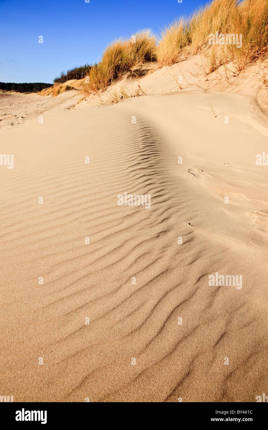 Coastal erosion of the sand dunes on Llanddwyn beach. Newborough, Isle of Anglesey, North Wales, UK. - Stock Image
