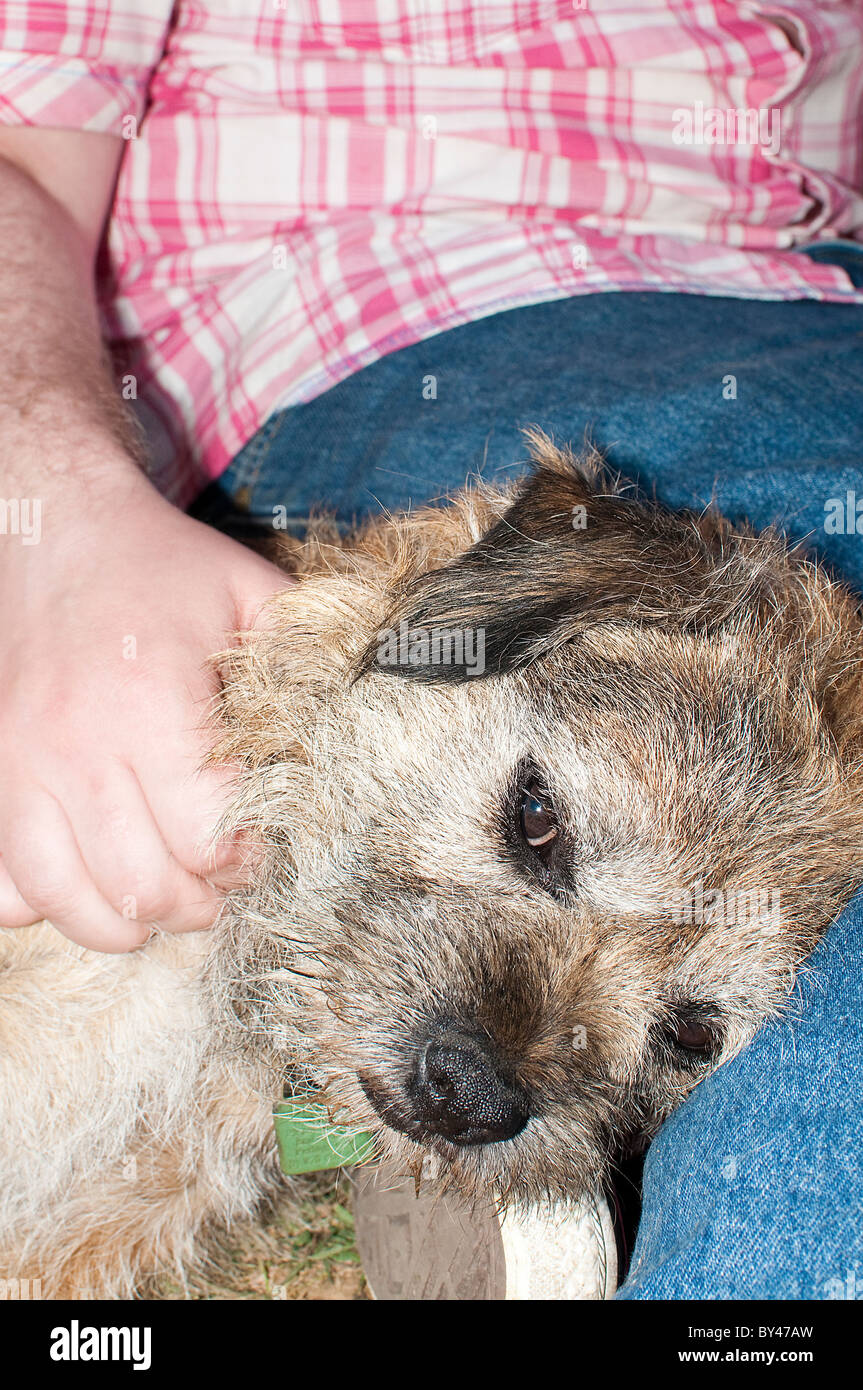 Man stroking dog - Stock Image