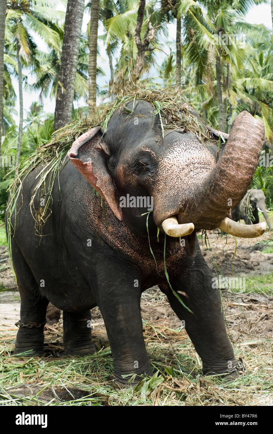 Elephant Sanctuary Stock Photos & Elephant Sanctuary Stock ...