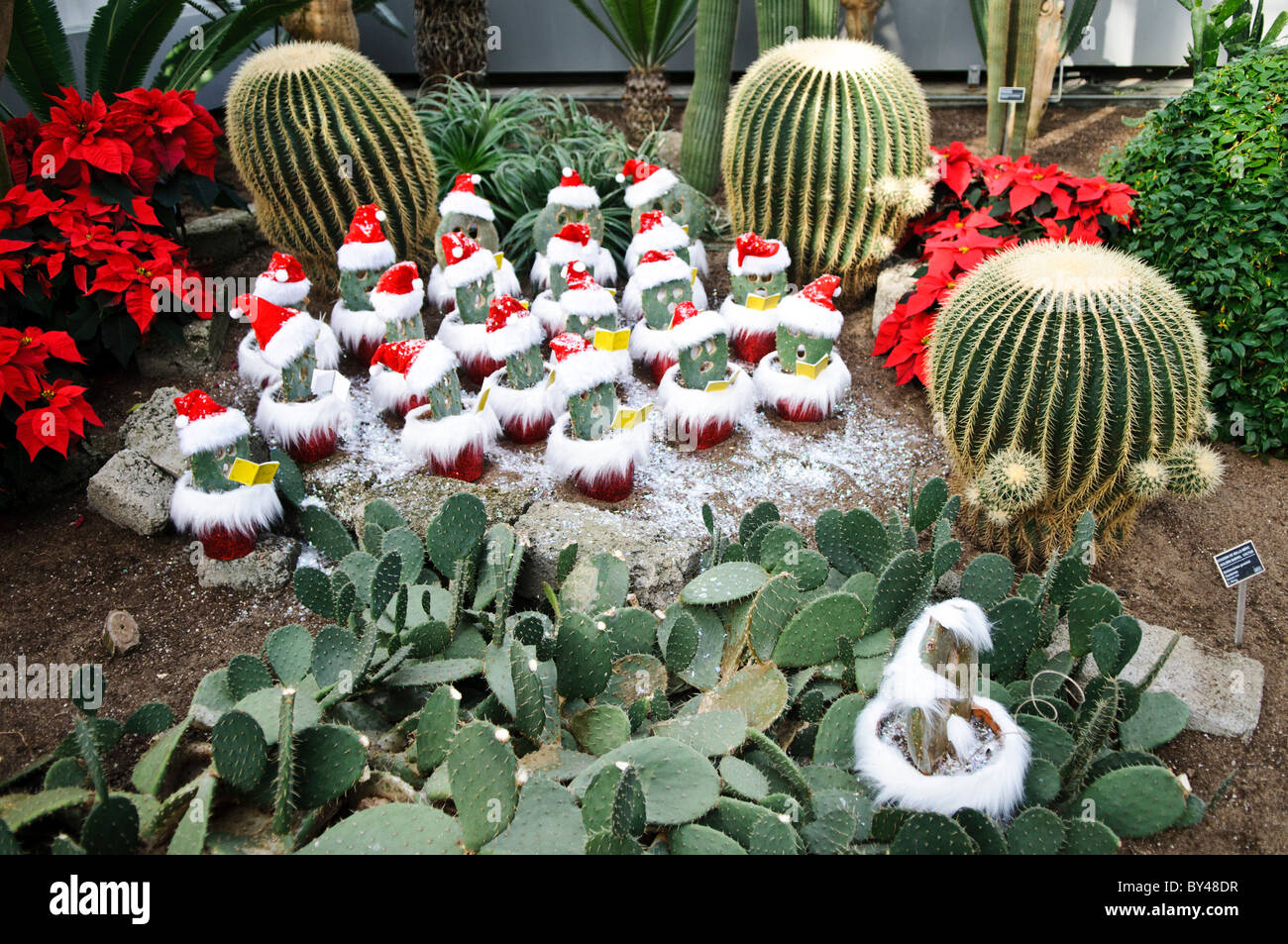cacti are decorated as christmas carolers inside montreals botanical garden one of the worlds largest indoor botanical gardens featuring a range of
