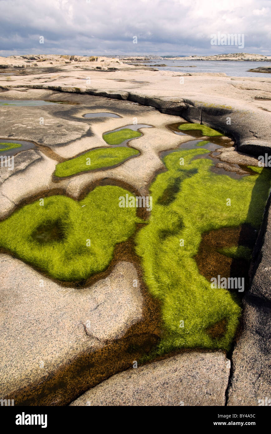 Green algae grow in puddles on a small glacially-shaped island of smooth, pink granite, west coast of Sweden - Stock Image