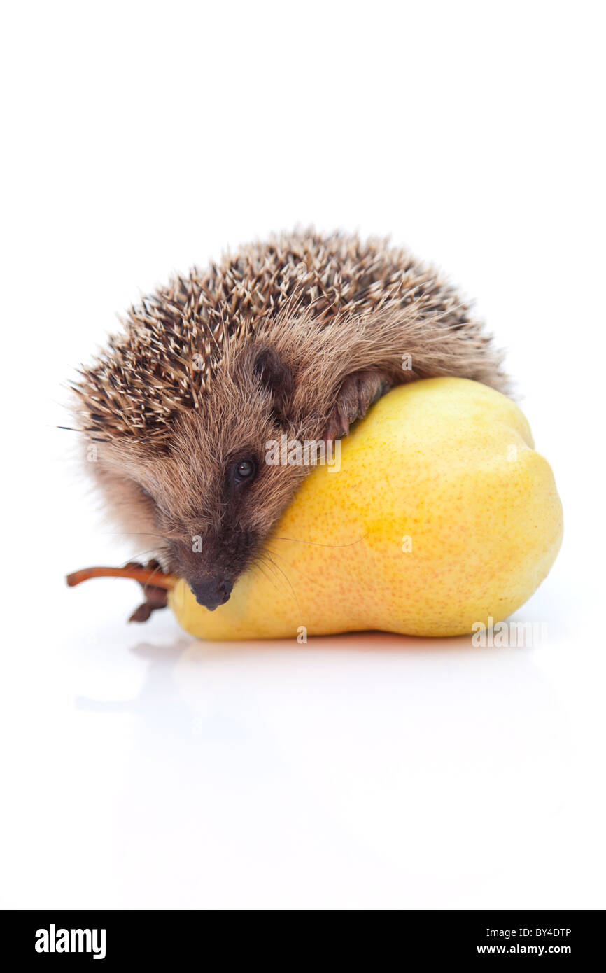 Little hedgehog and pear - Stock Image