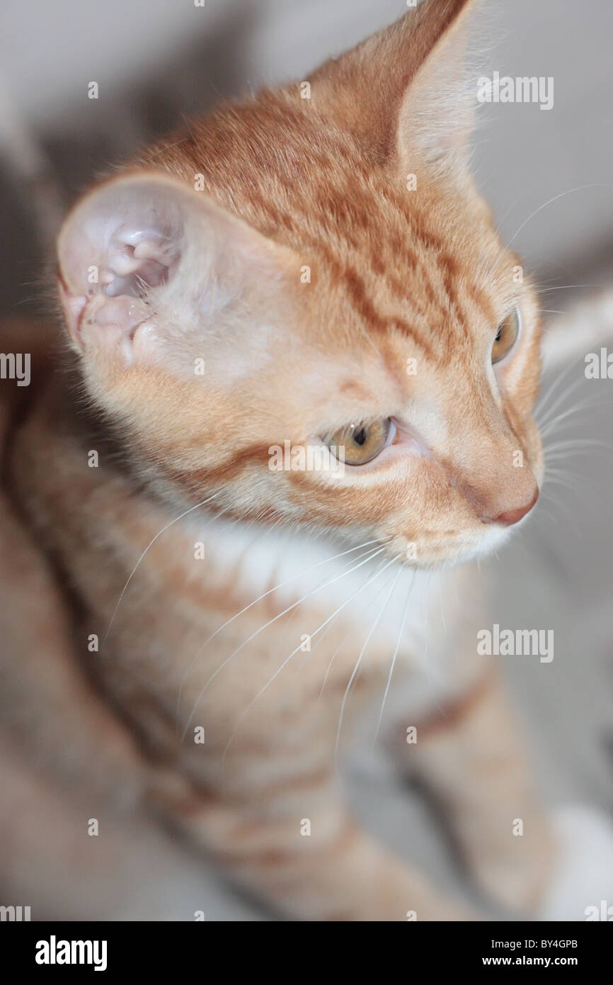 Side View of a Kitten - Stock Image