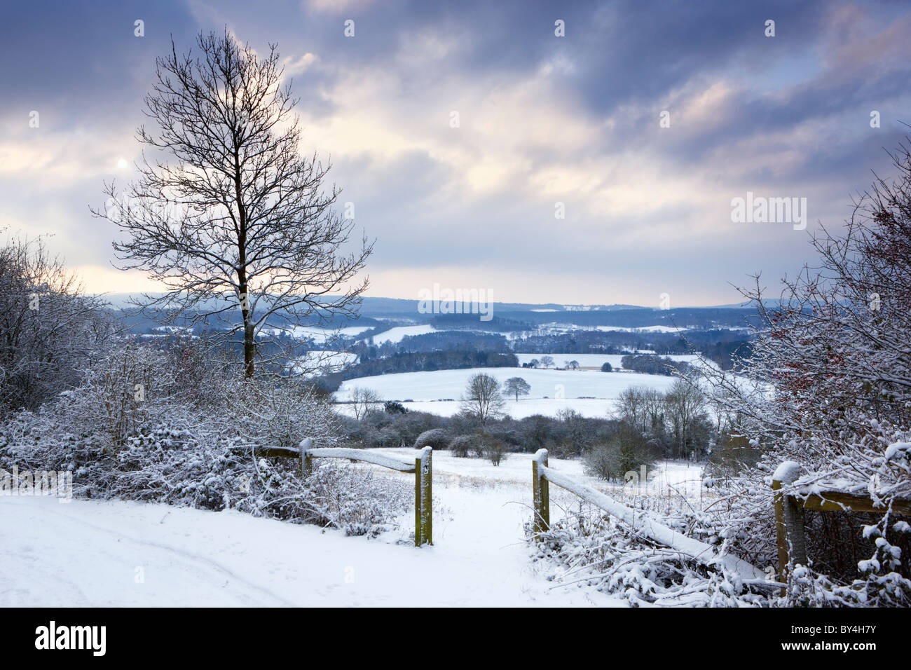 The sun beginning to break through the cloud on a cold wintry morning at Newlands Corner on the Albury Downs - Stock Image
