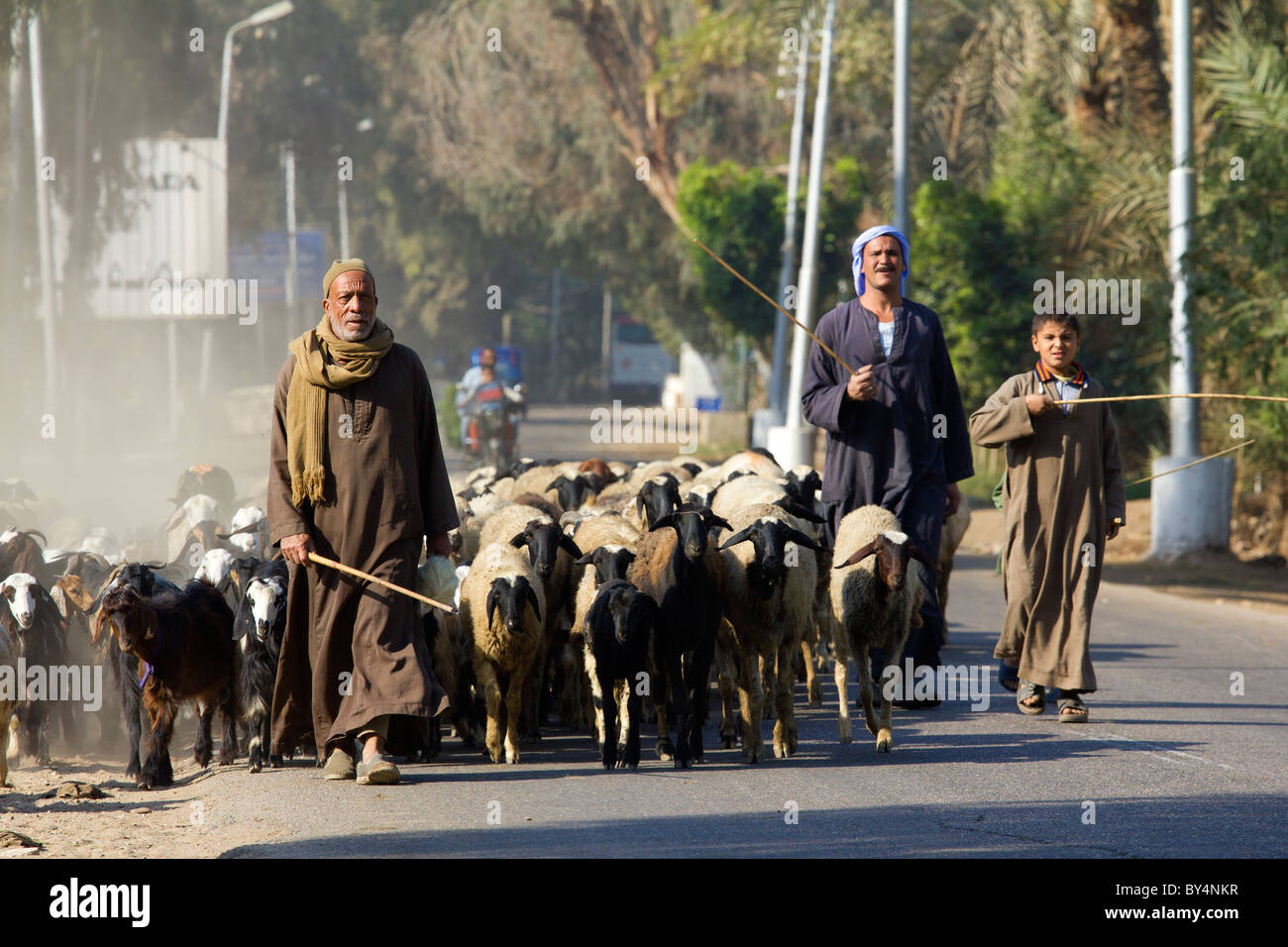 Goatherds near Saqqara, Egypt 2 - Stock Image