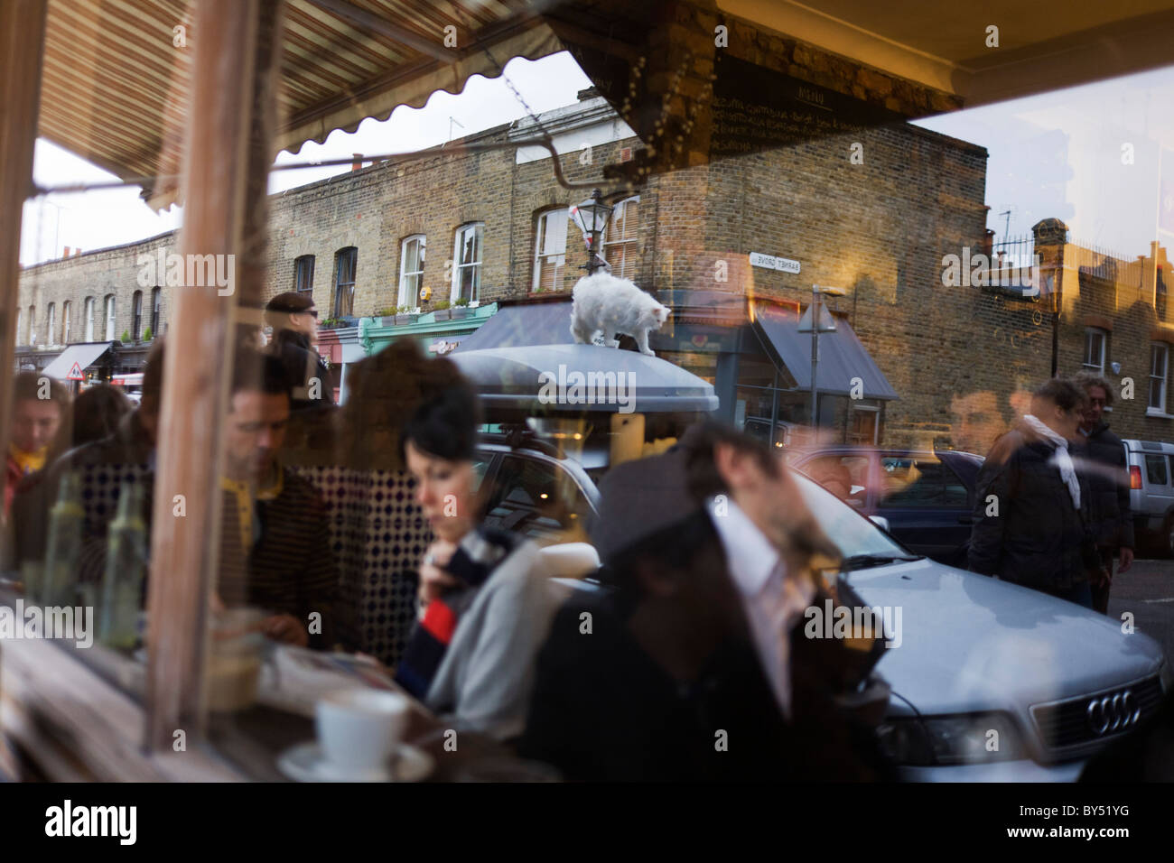 A white cat and cafe customers are reflected in the window of Campania Gastronomia cafe on Columbia Street and Barnet - Stock Image