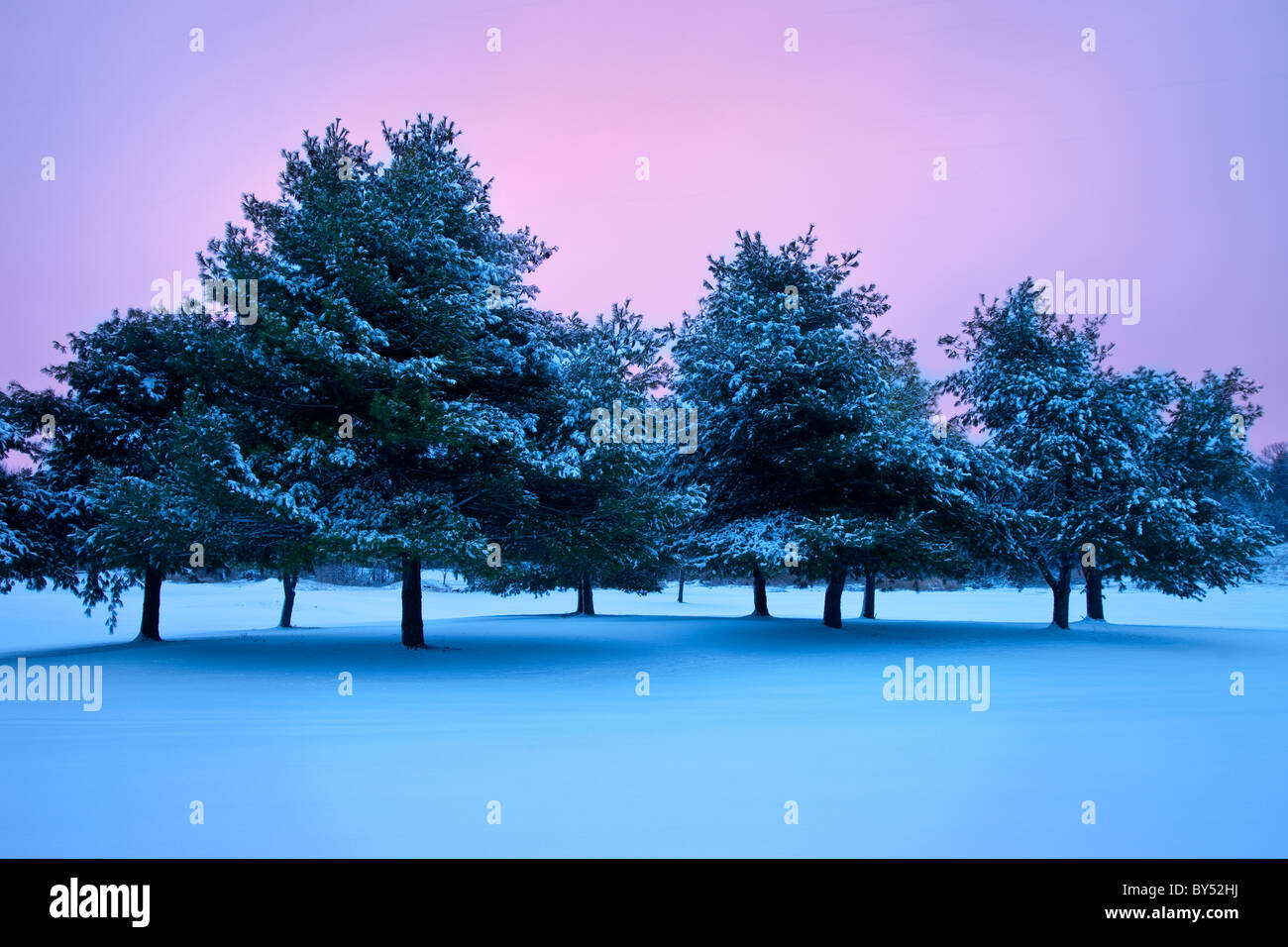 Line of snowy trees on a wintry evening, Brentwood Tennessee, USA - Stock Image