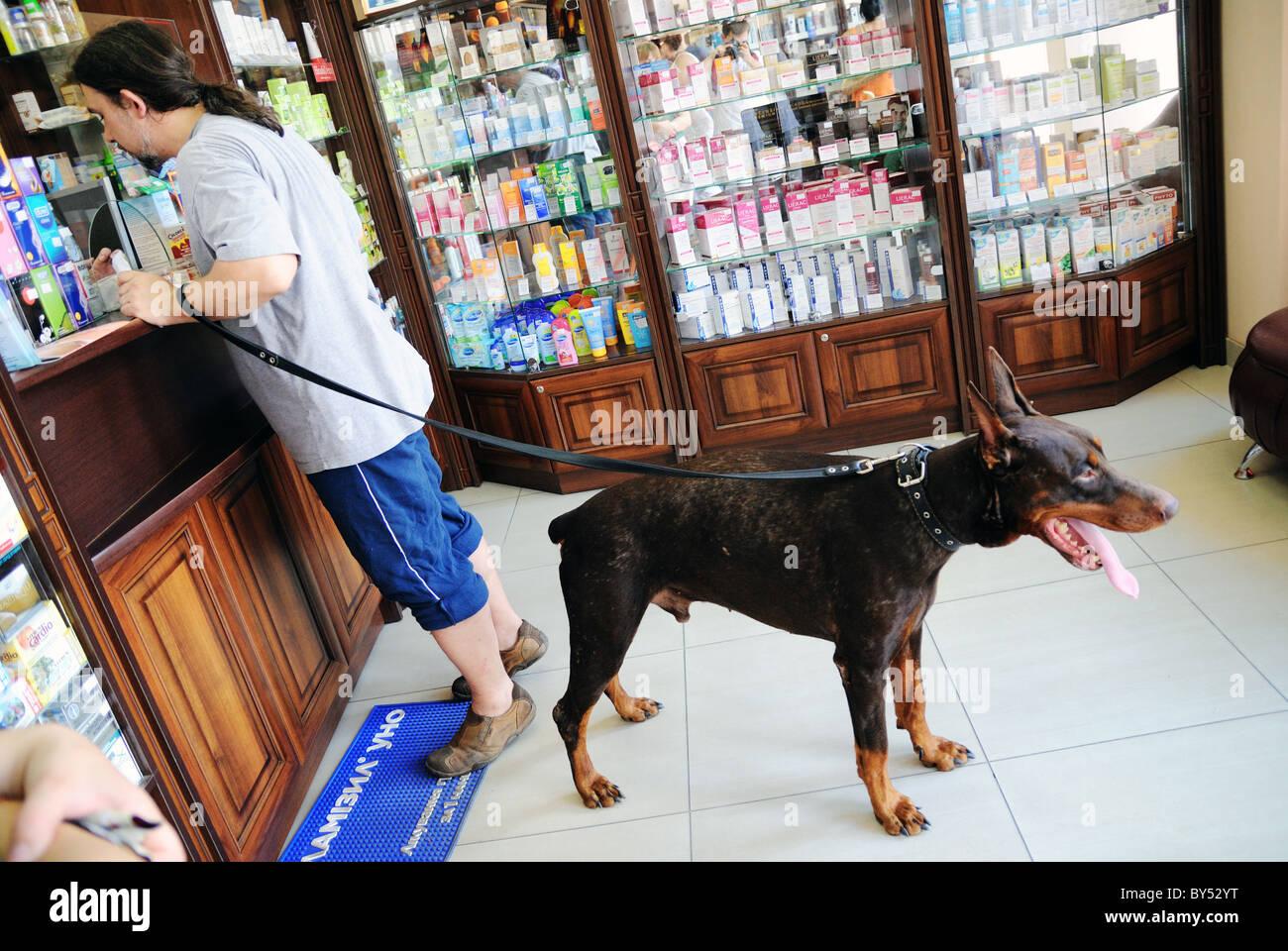 Vet clinics, pharmacies of Ukraine: a selection of sites