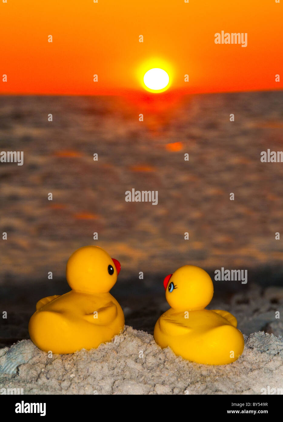 Rubber Duck Humor Stock Photos & Rubber Duck Humor Stock Images - Alamy