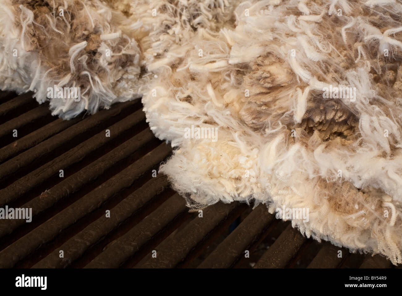 A fleece on a wool table in a shearing shed. - Stock Image