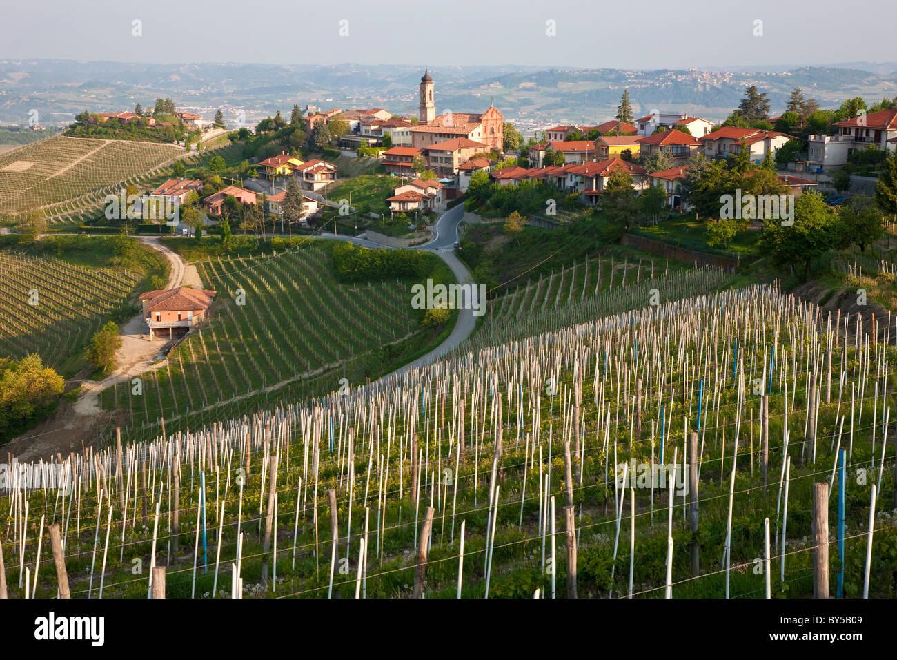 Vineyards, Piedmont, (or Piemonte or Piedmonte), Italy - Stock Image