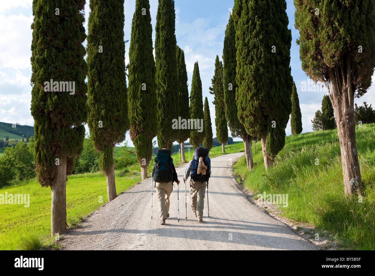 Winding Road, nr Pienza, Tuscany, Italy - Stock Image