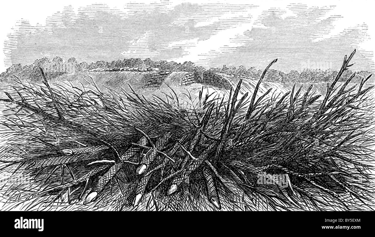 This engraving illustrates how an abatis looked US Civil War times and the difficulties it presented to attackers. - Stock Image