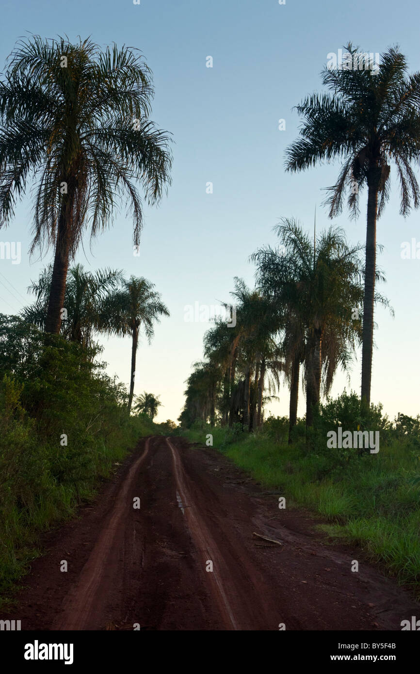 Sub-tropical forest of San Ignacio, Misones, Argentina. - Stock Image