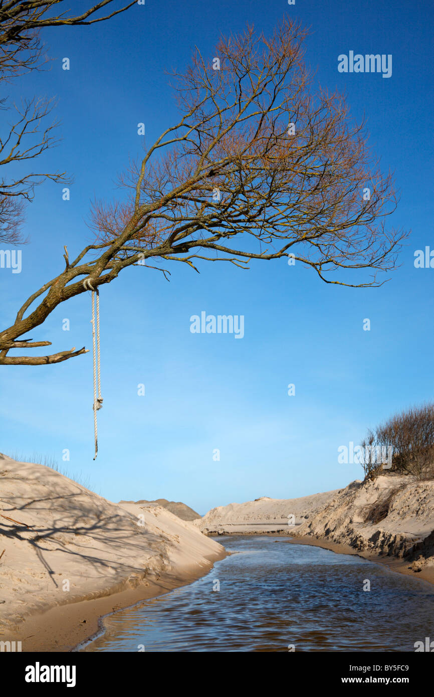 Tree with branches and a hanging rope over the sandy banks of a stream on the northern coast of Zealand, Denmark - Stock Image