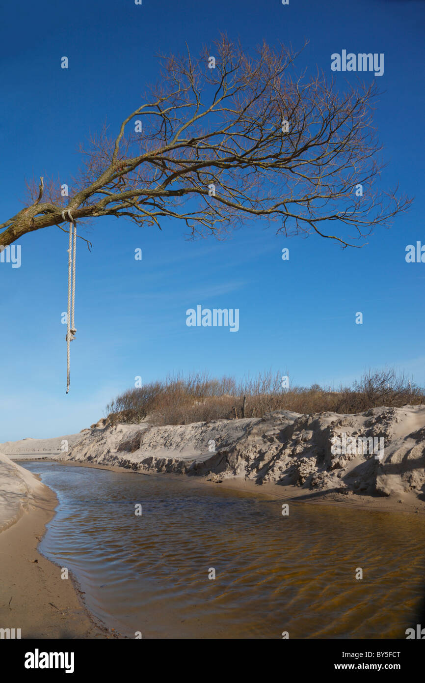 Tree with branches and a hanging rope over the sandy banks of the stream Vesterbæk on the northern coast of - Stock Image