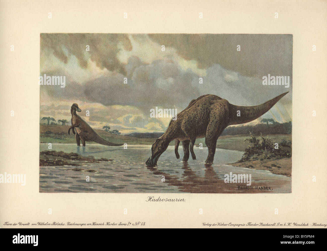 Hadrosaurs or duck-billed dinosaurs of the family Hadrosauridae were herbivorous dinosaurs of the Upper Cretaceous - Stock Image