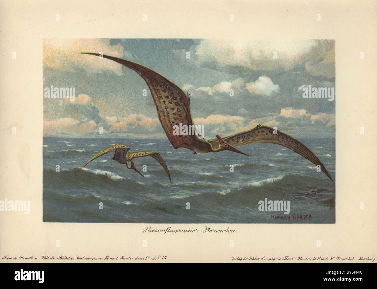 Pteranodon were large flying pterosaurs from the Late Cretaceous period with a wings - Stock Image