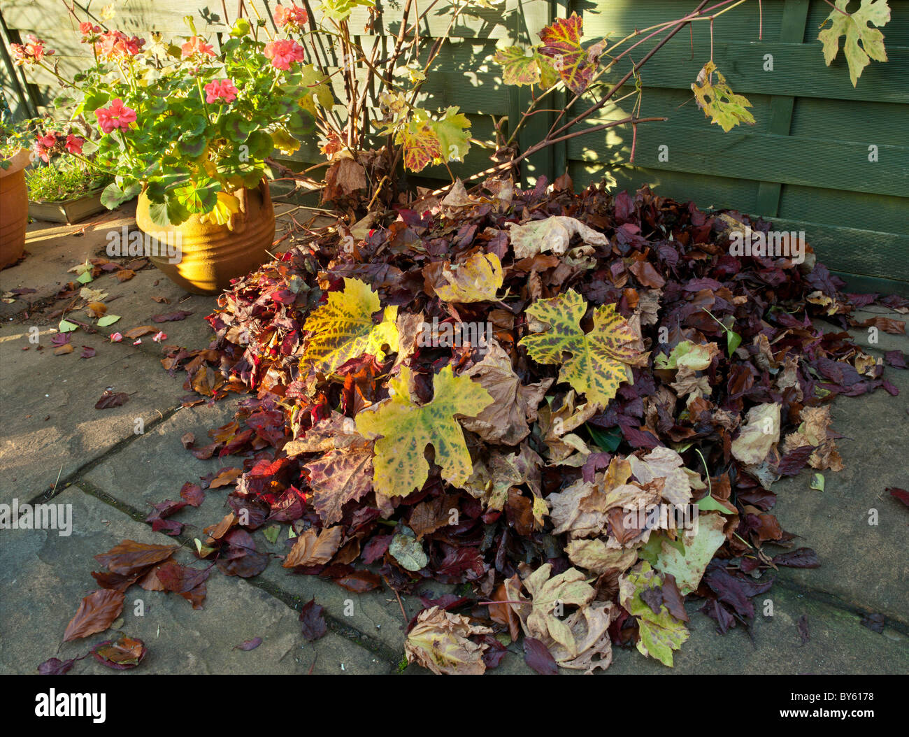 AUTUMN LEAVES ON PATIO WITH AUTUMN COLOURS. - Stock Image