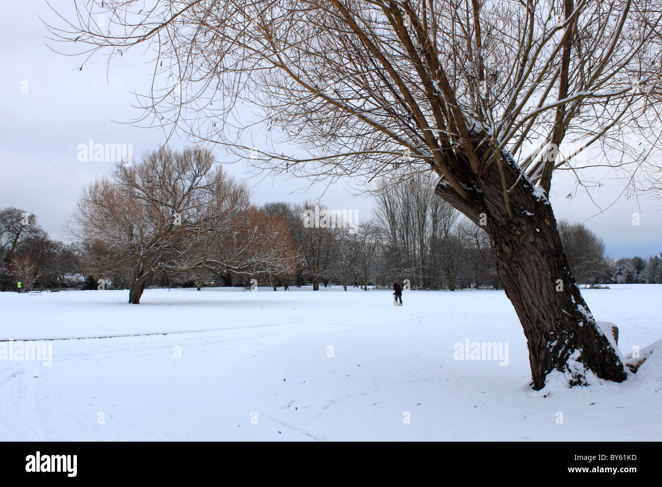 Walking dog in the snow, Hurst Meadows, Sadler's Ride, East Molesey, Surrey, England, Great Britain, United - Stock Image