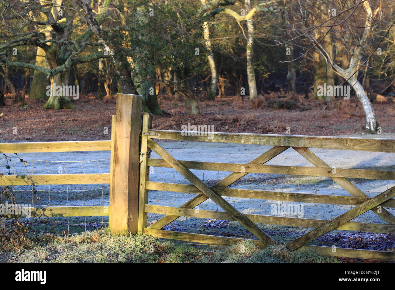Early morning view of gate and fence in New Forest, with frost on the ground. - Stock Image