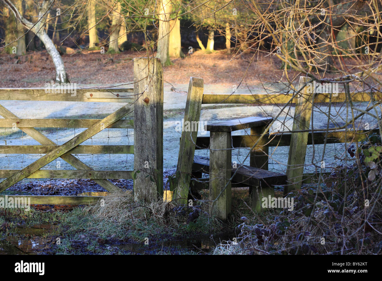 Early morning view of gate and stile in New Forest, with frost on the ground. - Stock Image