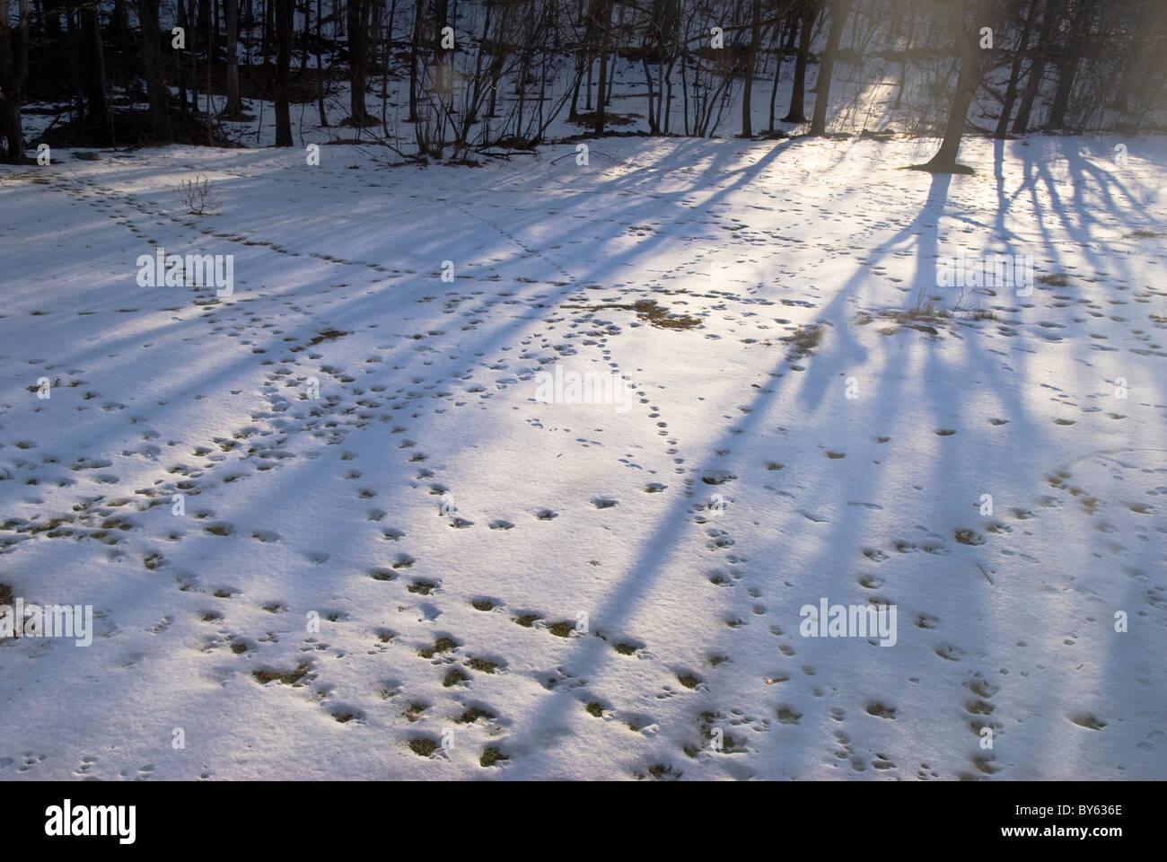 various animal footprints in snow Stock Photo