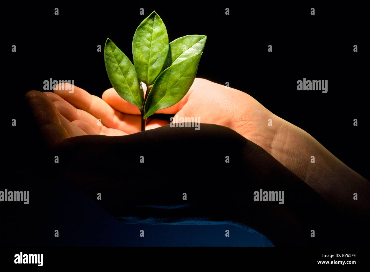 Image of a new green plant in the male hands - Stock Image