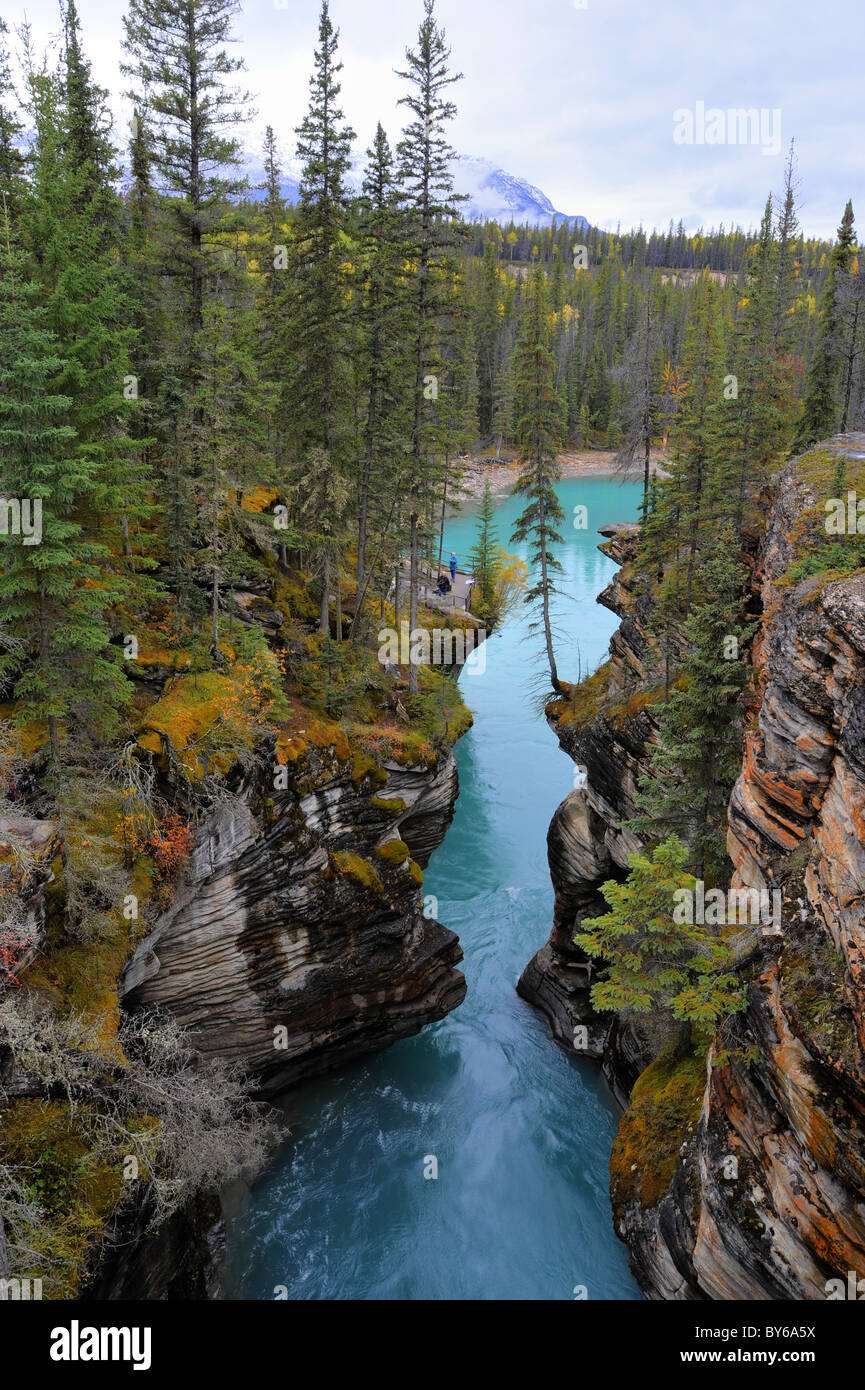Downstream view from Athabasca Falls, Alberta, Canada - Stock Image