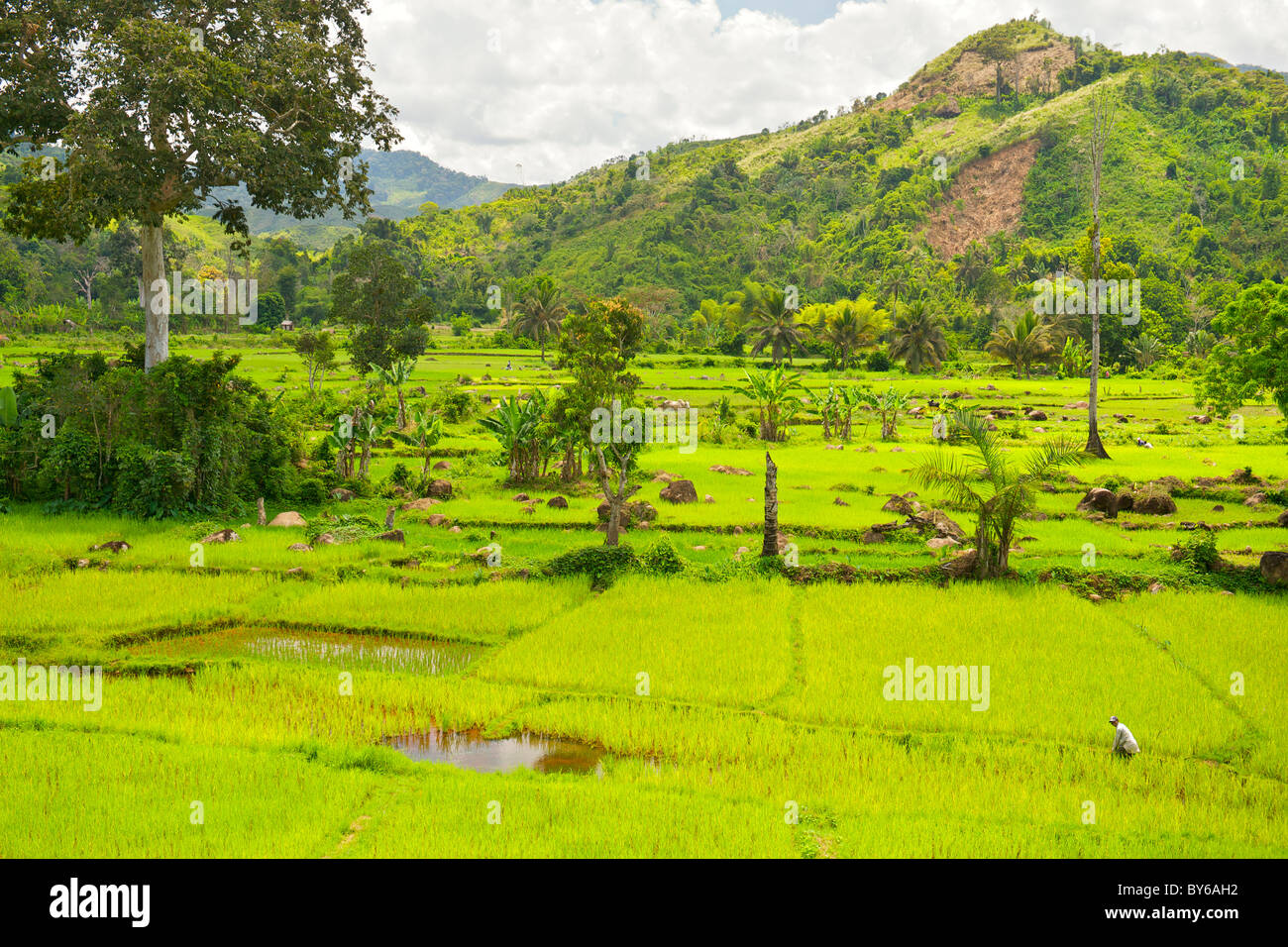 View of the lush landscape and verdant rice paddy plantations bordering the Marojejy National Park in northeast - Stock Image