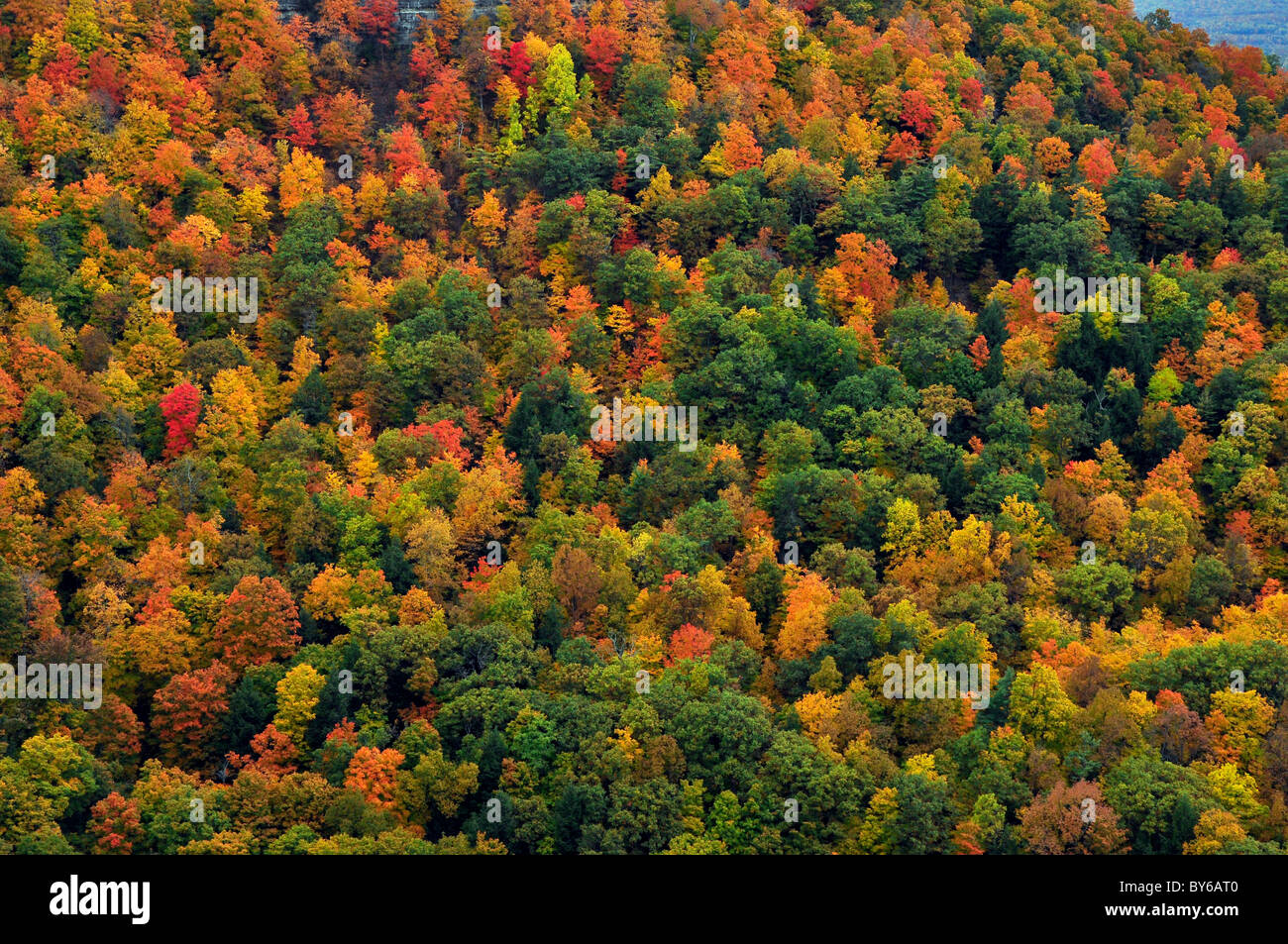 Fall Colors in Upstate New York - Stock Image